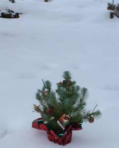 tiny_tree